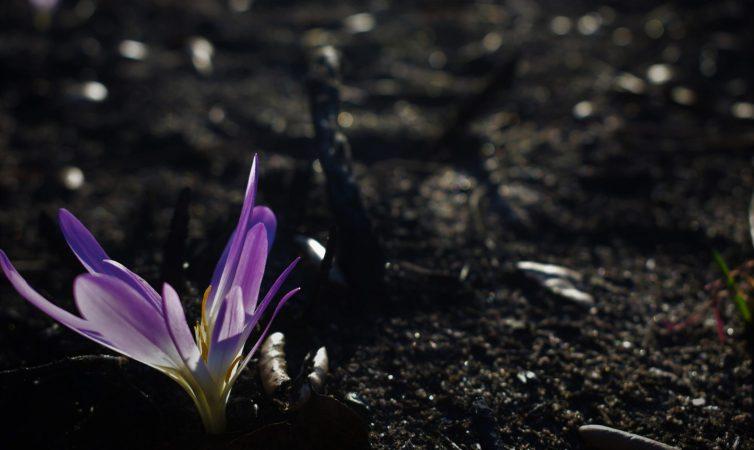 A notável resiliência da natureza após os incêndios.