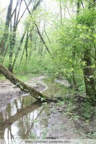 Small brook in flood plain, River Erlauf, Spring 2009