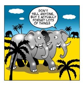 i_forget_elephant