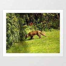 fox, animal, hunting, summer, photo manipulation,