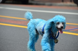 This Dog is Blue. Your argument is invalid. Philadelphia Pride Parade 2013