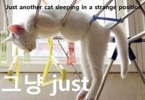 fcats_sleeping_in_weird_ways_640_16