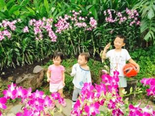Orchid photo spot