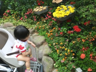 Butterfly garden in Changi Airport