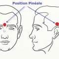 Comment activer les glandes pinéale et pituitaire