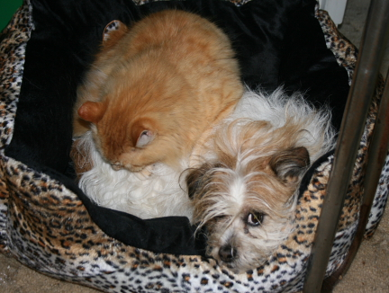 shared-bed