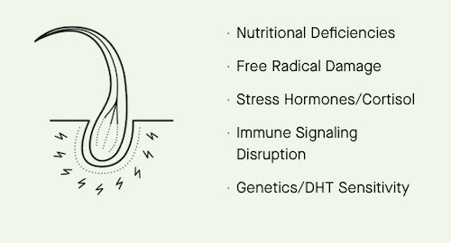 nutrafol hair deficiencies