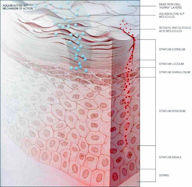 restorsea how enzyme works