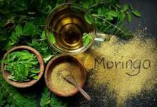 Boost your immunity amid COVID-19 with Moringa; know its antiviral, antifungal, antioxidant properties