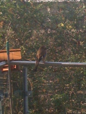 8302156-Bird PMM 04