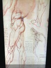 24 Da Vinci Mechanics of Genius