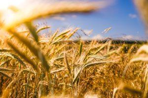 Fairfax inova com o desenvolvimento de seguro rural sustentável