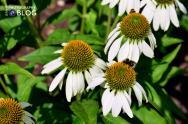 January - A Bit of Bee-auty