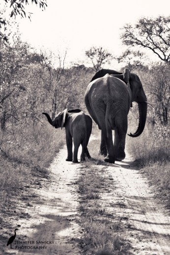 Mama and baby striking a pose in the Sabi Sands. South Africa, May 2015 1/1000sec, f8.0, ISO 400