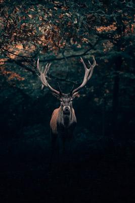 brown deer underneath a tree