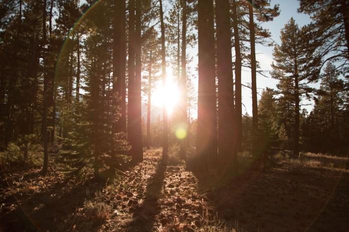 Wooden sunlight