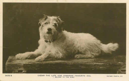 Caesar_the_Kings_Dog
