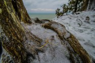 Snow Dusted Roots