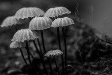 Happy Mushroom Family J.T. Avery Photography