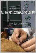 2018.05.30_YouTube|かまくらげんき動物病院|JTCVM国際中獣医学院日本