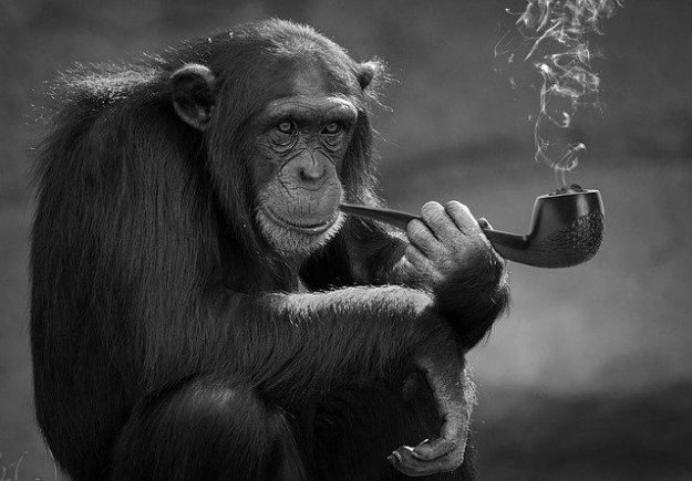 smoking-3954750_640