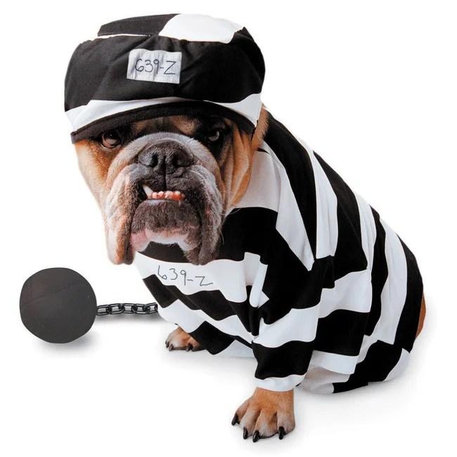 chien en habits de prisonnier