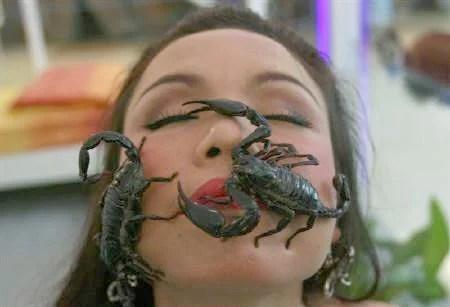 chinoise fan de scorpions