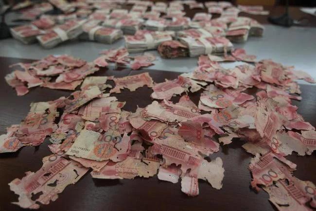 billets de banque dévorés par des termites