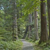 Stair master: The stone path up 414-meter Mount Haguro features 2,446 steps. | CHRIS BAMFORTH PHOTO