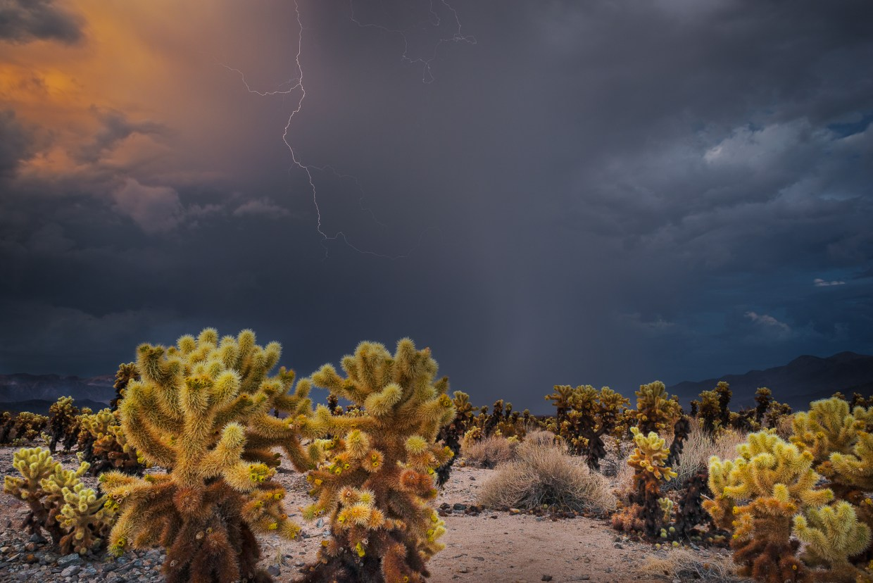Desert Monsoon by T.M. Schultze