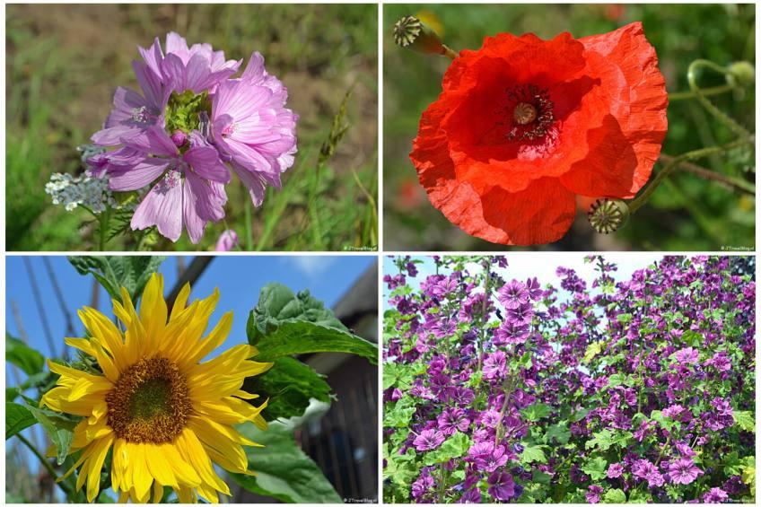 Bloemen die ik tegenkwam tijdens mijn wandeling rond Nijkerk