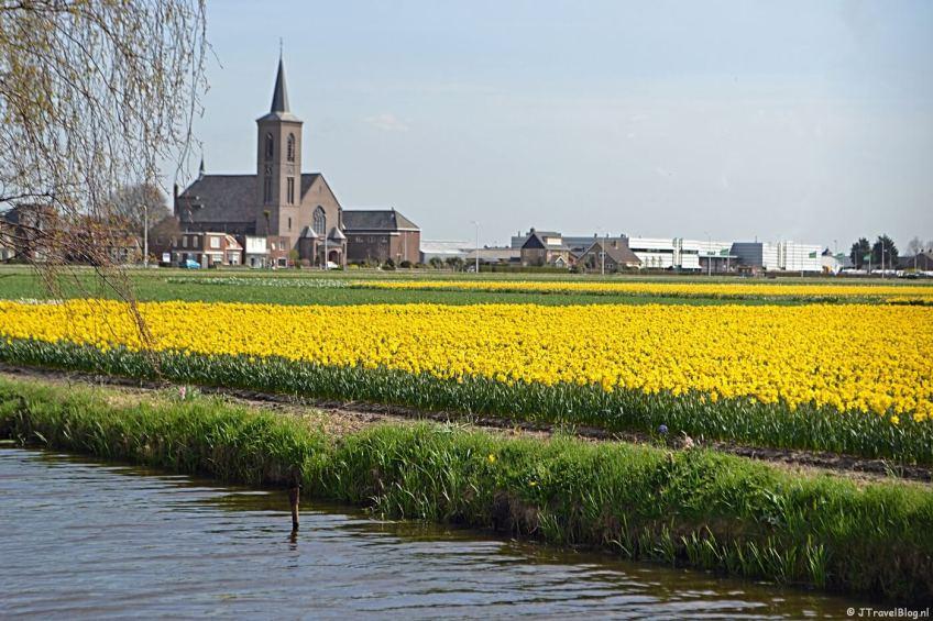 De Bollenvelden met de kerk in De Zilk