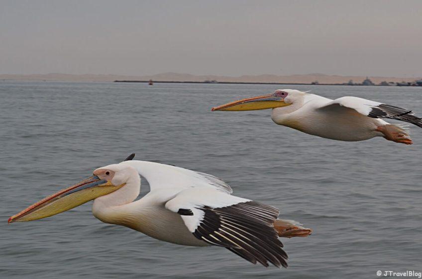 Pelikanen tijdens de bootcruise vanuit Walvis Bay