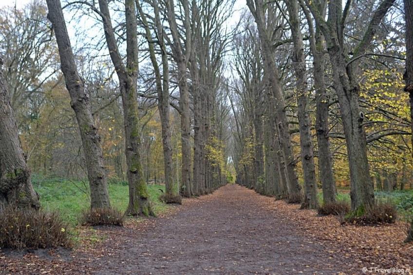 De Adriennelaan in de herfst in Wandelbos Groenendaal in Heemstede