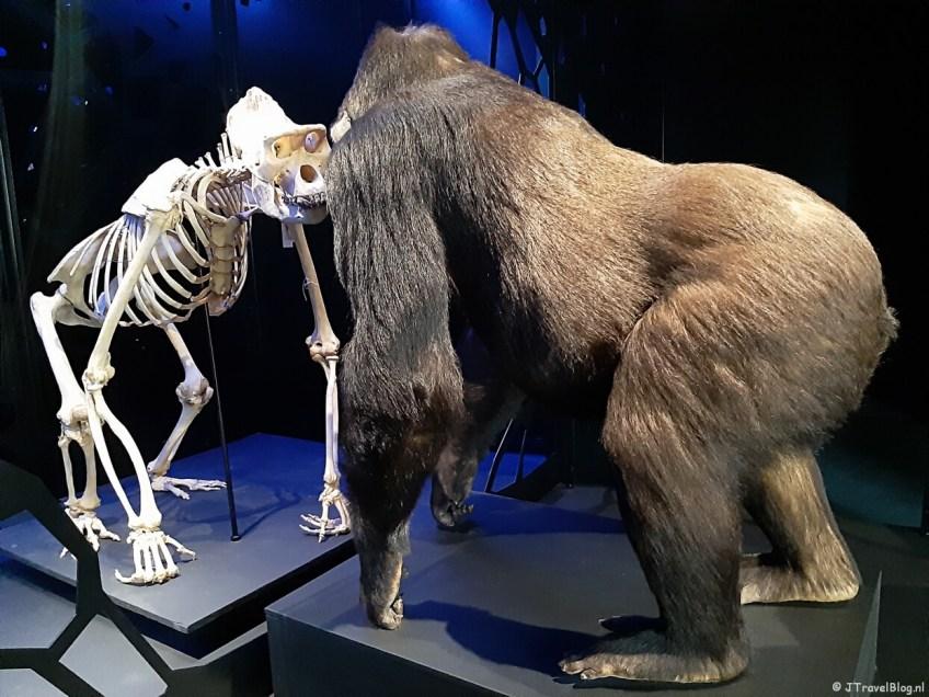 De zaal 'De dood' in Naturalis in Leiden