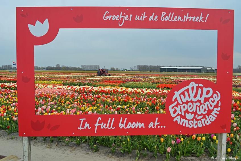 Doen in de Bollenstreek: Tulip Experience Amsterdam