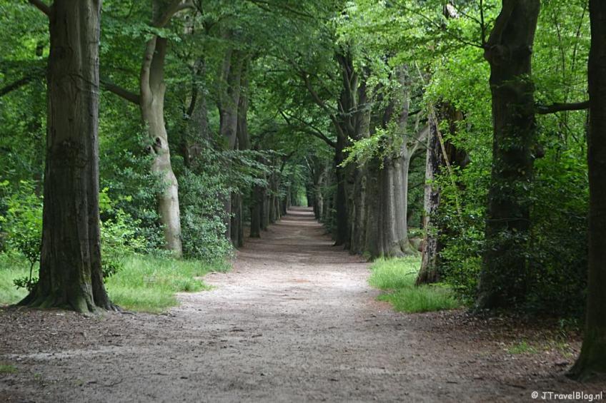Bospad in het Loosdrechtsebos tijdens de 6e etappe van het Westerborkpad