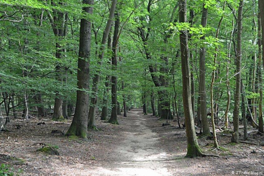 Bospad op de Hoorneboegse Heide tijdens de 6e etappe van het Westerborkpad