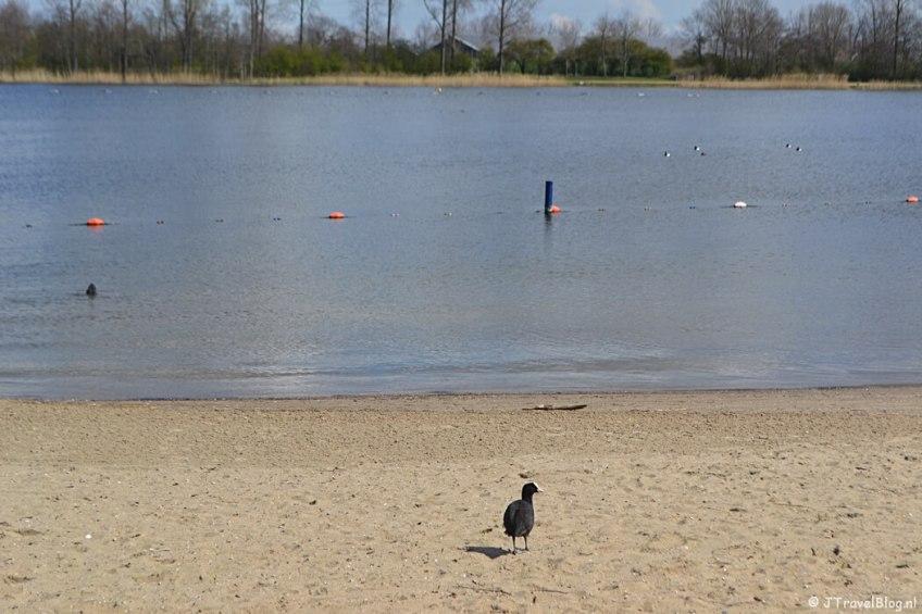 Het strand in het Haarlemmermeerse Bos in Hoofddorp tijdens de Trage Tocht Vijfhuizen