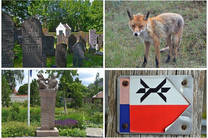 Juni 2021: Joodse begraafplaats in Bussum tijdens de 5e etappe van het Westerborkpad, een vos in de Amsterdamse Waterleidingduinen, het Oorlogsmonument in Nieuw-Loosdrecht tijdens de 6e etappe van het Westerborkpad en het markeringsteken van het Westerborkpad