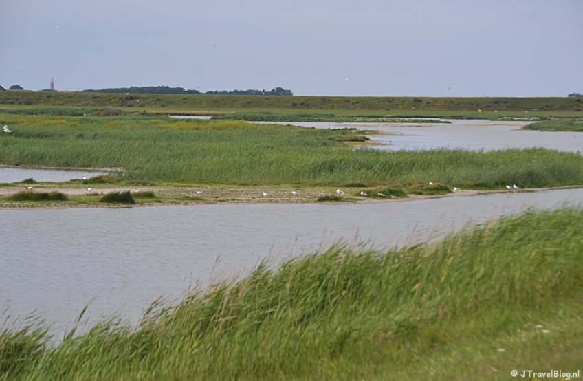 Natuurgebied Utopia op Texel
