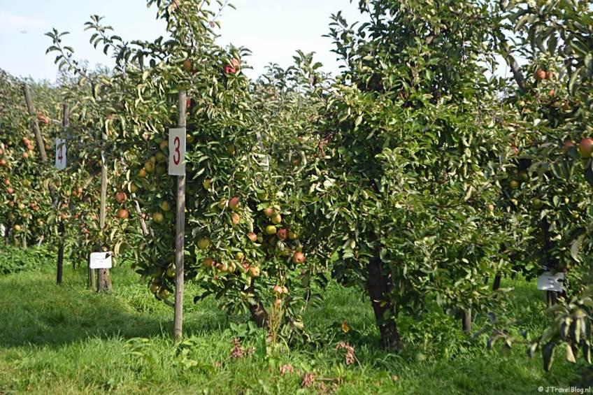 Adoptiebomen op Landgoed De Olmenhorst