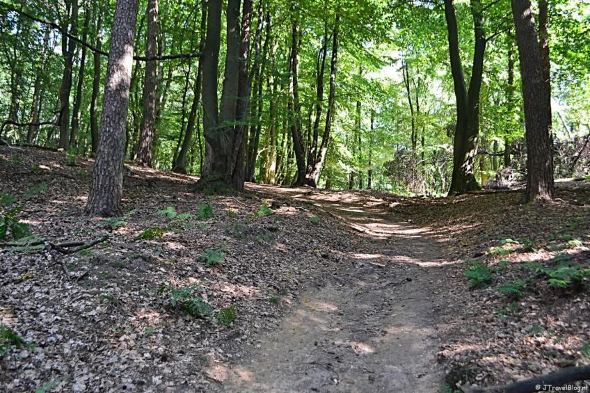 In de bossen tijdens mijn Trage Tocht wandeling