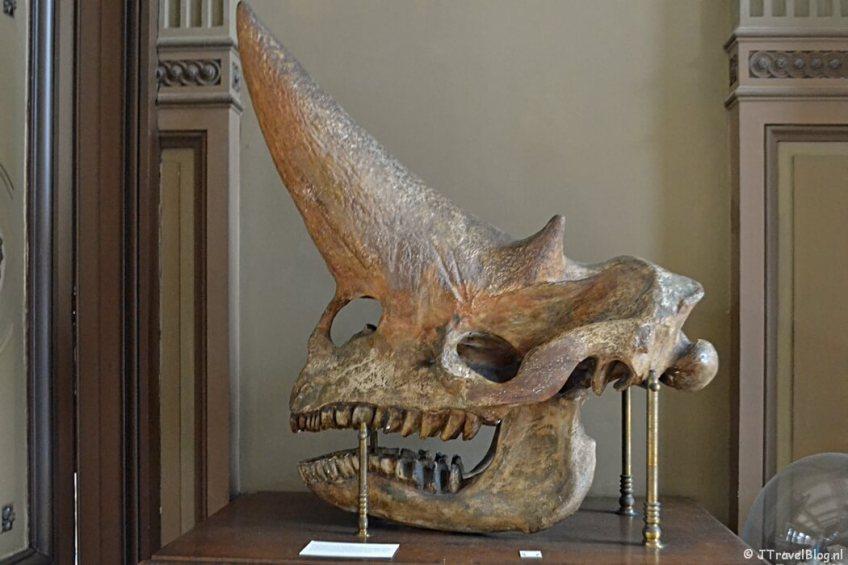 De Fossielenzaal van het Teylers Museum in Haarlem
