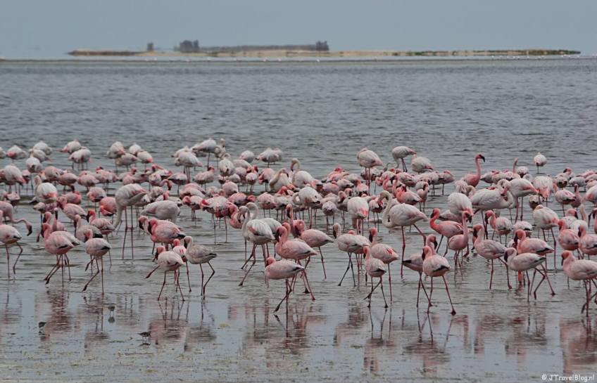 Flamingo's tijdens de Living Desert Tour in de duinen bij Walvis Bay