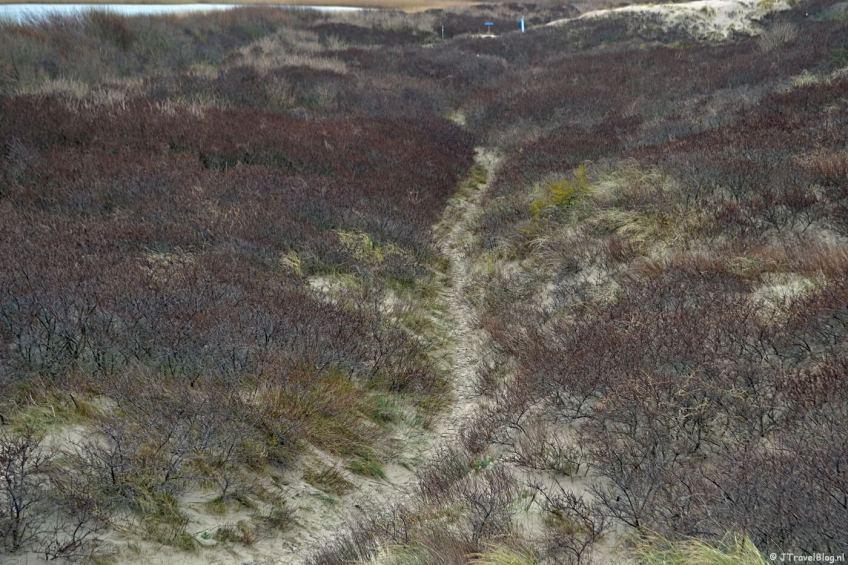 Wandelen in de duinen van IJmuiden: het wandelpad en de duindoorns