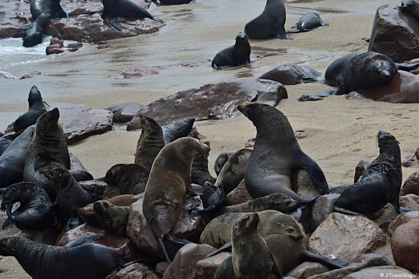Zeehonden in Cape Cross op dag 15 van mijn rondreis door Zuid-Afrika en Namibië
