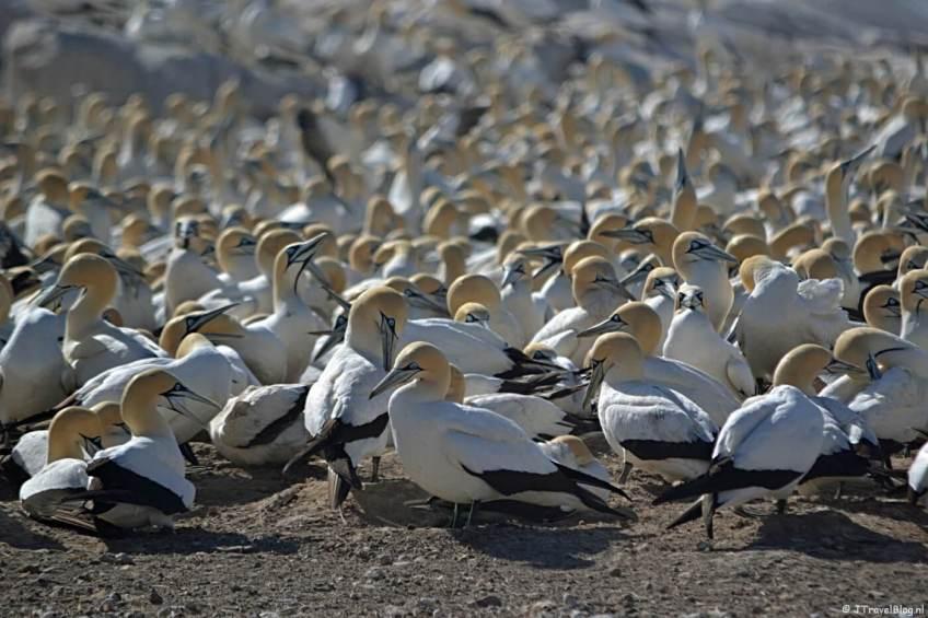 Vogeleiland op dag 6 van mijn rondreis door Zuid-Afrika en Namibië