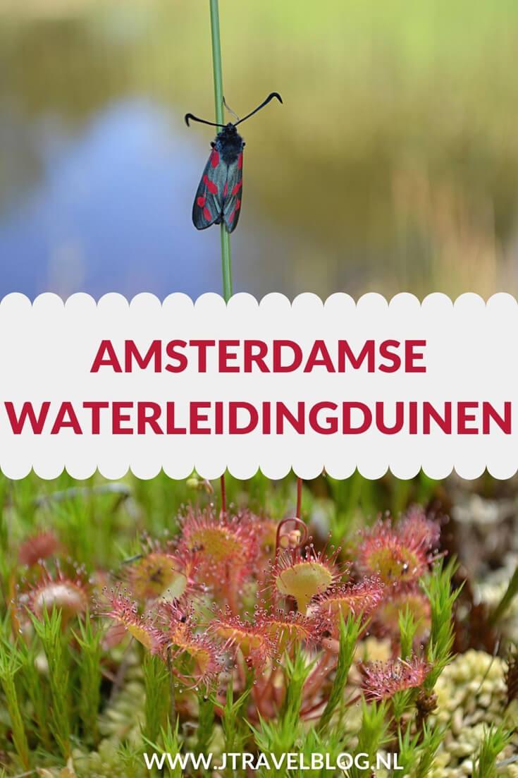 In deze blog geef ik je tips en informatie over de Amsterdamse Waterleidingduinen. Wie mij volgt weet dat ik regelmatig een wandeling maak in de Amsterdamse Waterleidingduinen. Wat is er zo bijzonder aan dit gebied. Je leest het hier. #amsterdamsewaterleidingduinen #awd #wandelen #hiken #natuur #tips #informatie #jtravel #jtravelblog