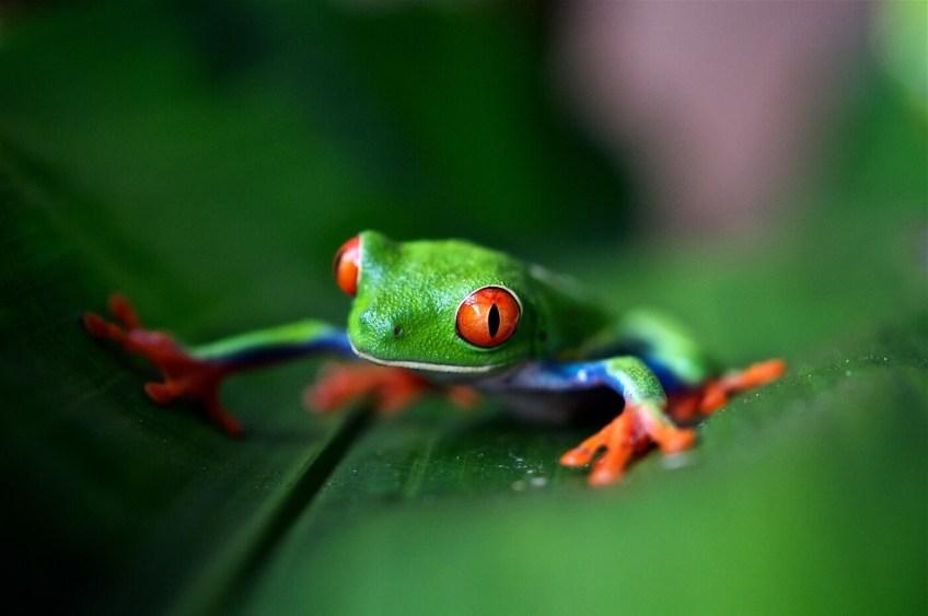 Costa Rica Foto: Trevor Cole / Unsplash